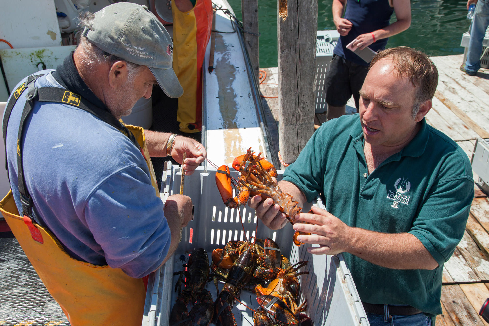 Order Live Maine Lobsters