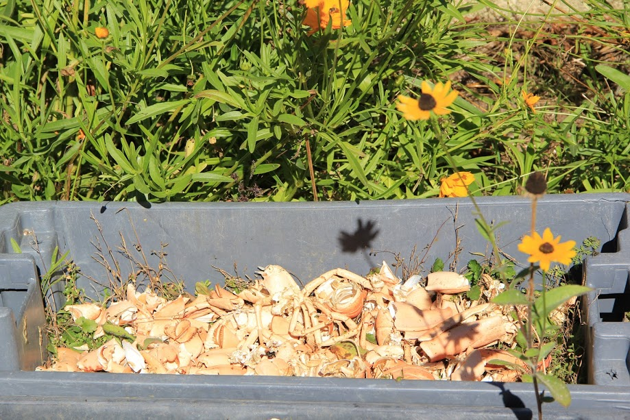 Benefits of Composting with Lobster Shells – Buy Live Maine